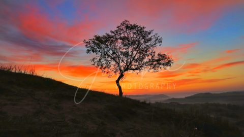 Lone Tree, Autumn, Inner Mongolia, China
